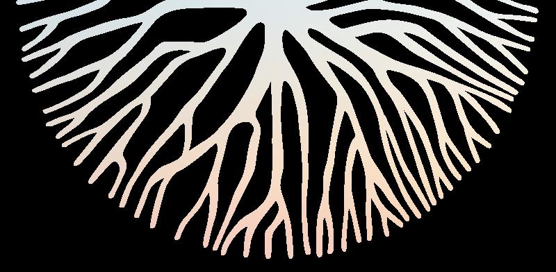 logo-coul-signe-graphique-kodama-800x392-flare
