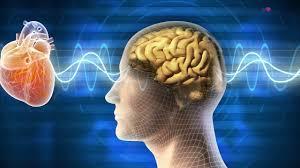 cohérence cardiaque assessment coeur cerveau kodama